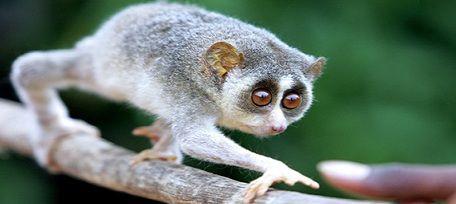 The Top 10 Weirdest Species in the World