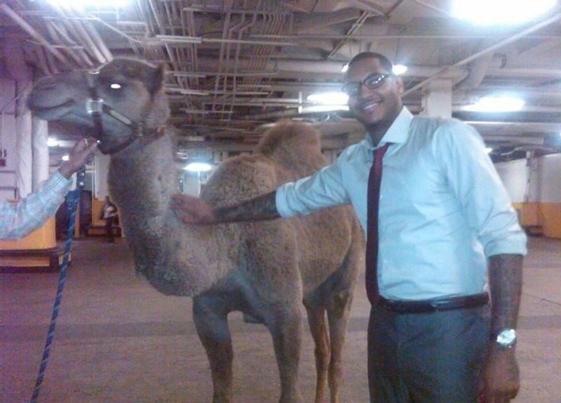 Carmelo-Anthony-Camel