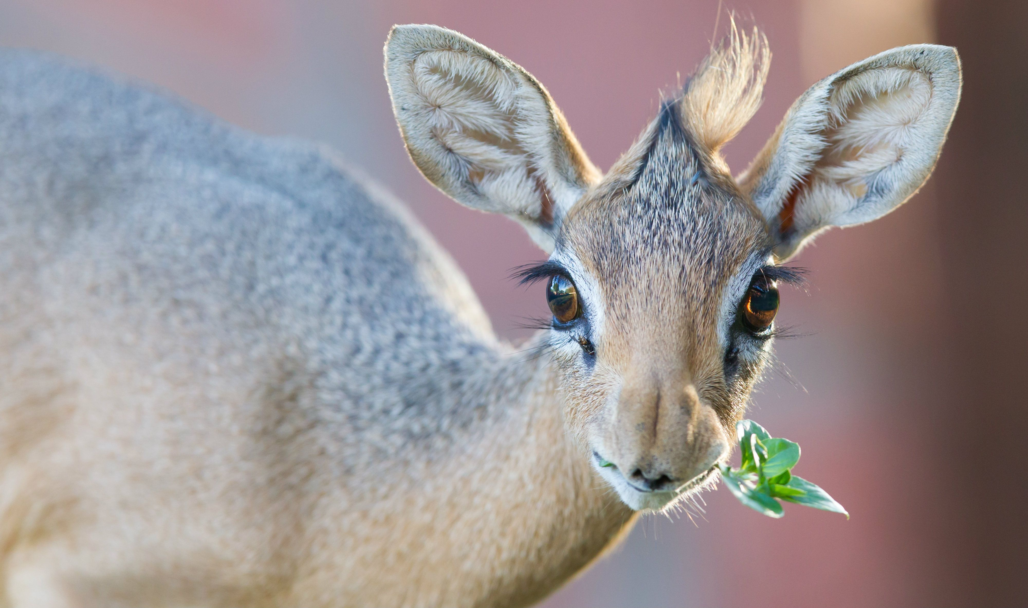 15 Weird Animals That Make Shockingly Cute Babies