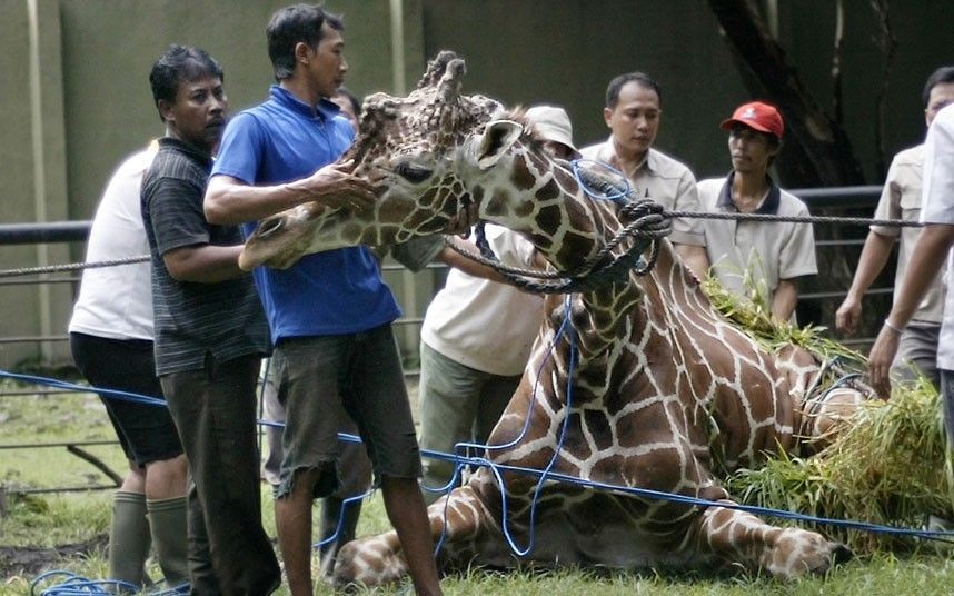 The 10 Most Inhumane Zoos In The World
