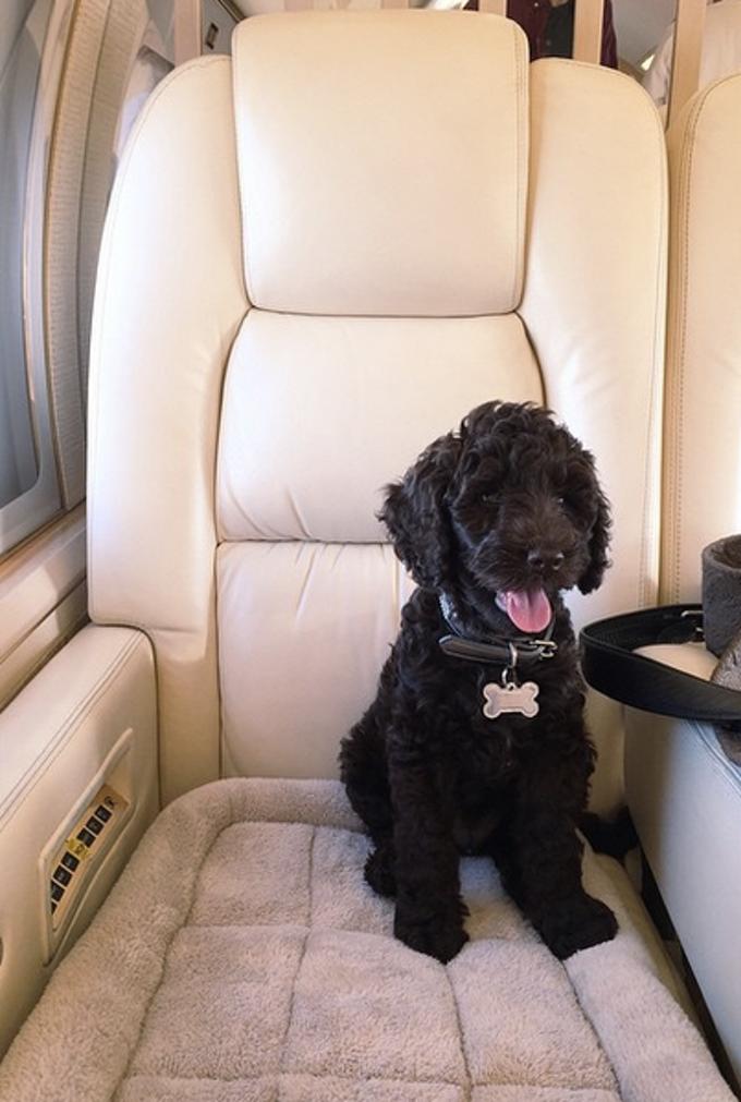 ariana-grande-new-puppy