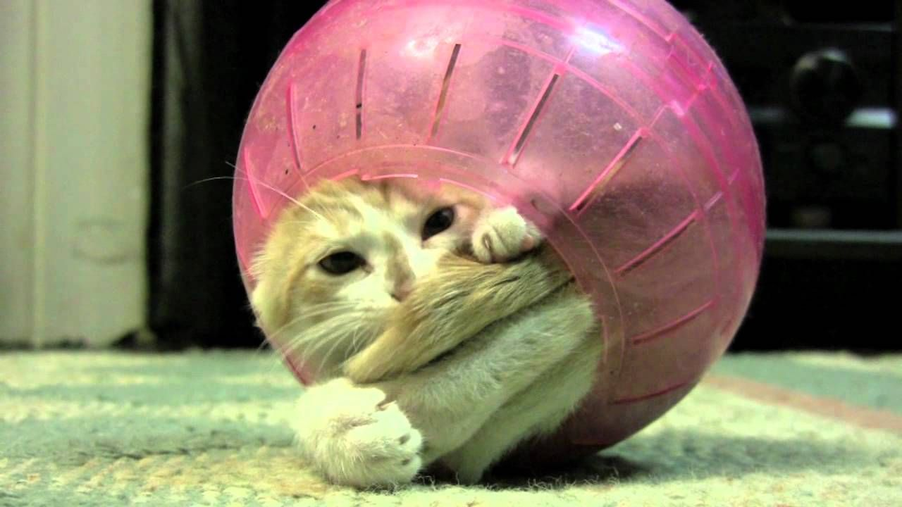 15 Hilarious Cat Videos That Will Leave You In Stitches