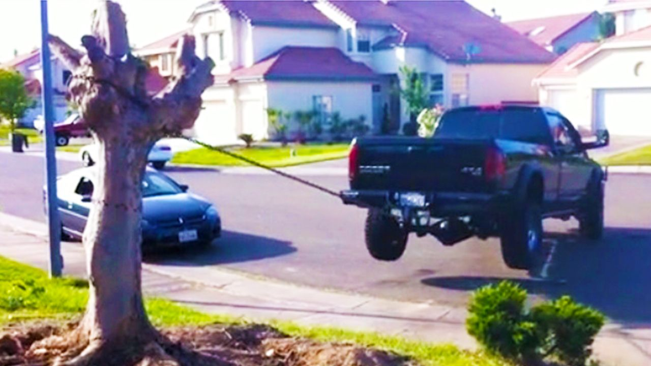 Redneck Tree Removal Gone Wrong