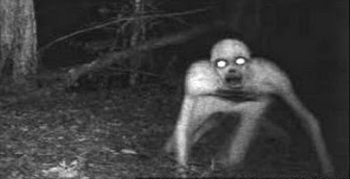 15 Scariest Trail Cam Pictures That Will Freak You Out