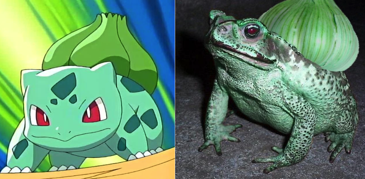 15 Pokémon You Didnt Know Were Based On Real Life Creatures